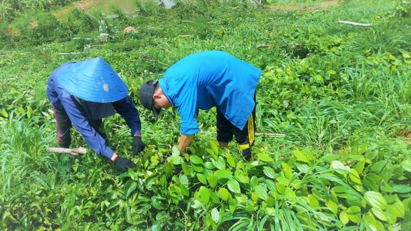 Người dân sửa sang lại vườn cây mong vớt vát phần nào