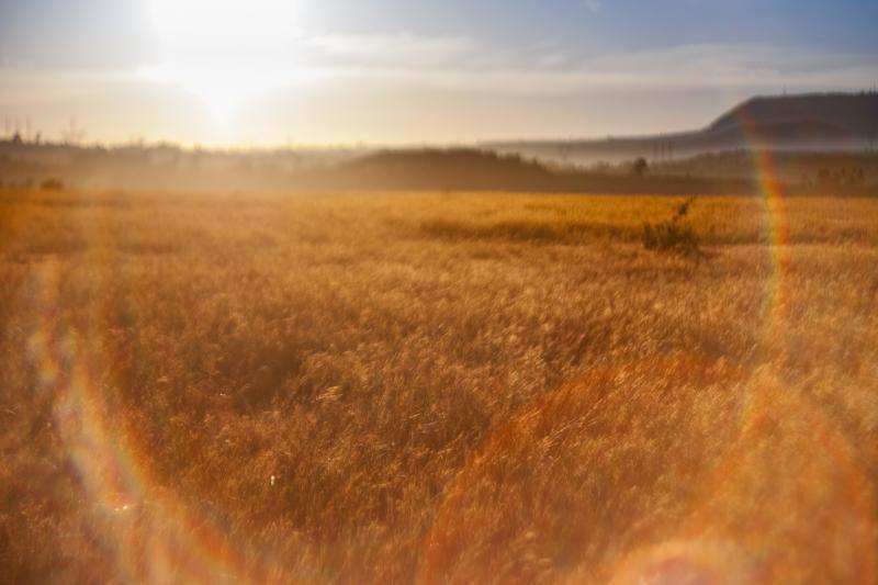 Không gian lung linh của nắng khiến màu sắc cảnh vật thêm phần sắc nét