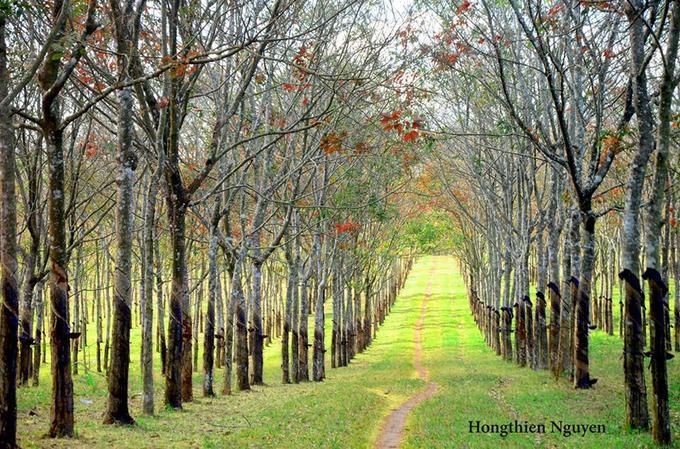 Nằm ở huyện Chư Sê cách Pleiku 40 km về phía Nam, phóng tầm mắt từ hồ Iaring sẽ thấy hàng cao su thẳng tắp rụng lá vàng bên thảm cỏ xanh.