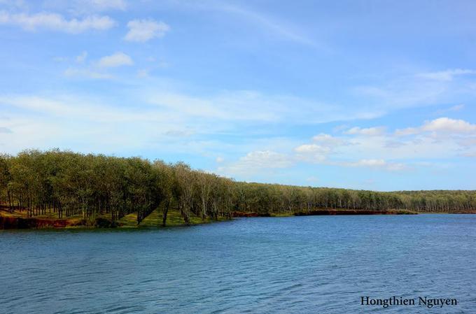 Đi trong cánh rừng cao su vào thời điểm này, bạn sẽ thấy khung cảnh đẹp như một bức tranh với nền trời xanh biếc.