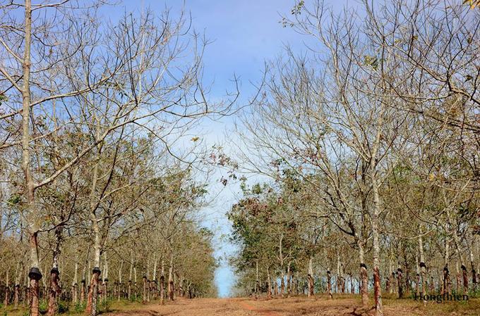 Con đường trải đầy thảm lá rụng, sắc màu của lá xanh ngả sang úa vàng rồi chuyển dần sang màu đỏ rực tạo ra vẻ đẹp khác lạ mà không nơi nào sánh được.