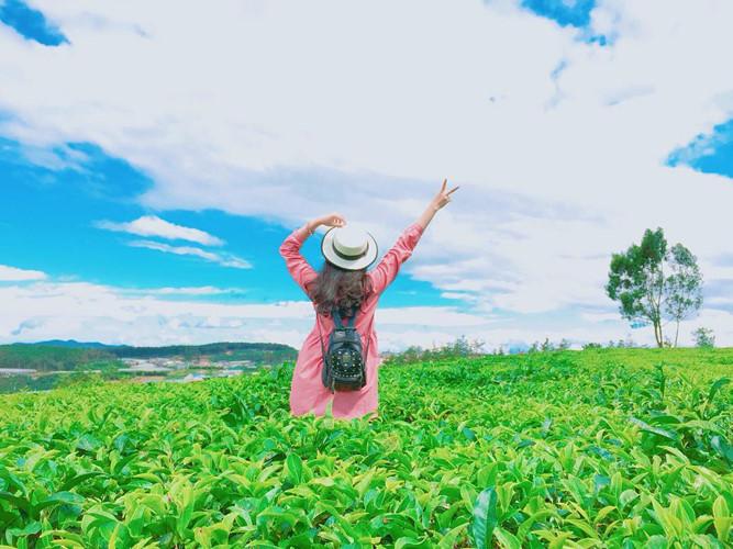 Vậy nên nếu có dịp đến với cánh đồng chè tại phố Núi Gia Lai bạn nên tranh thủ ghi lại những khoảnh khắc