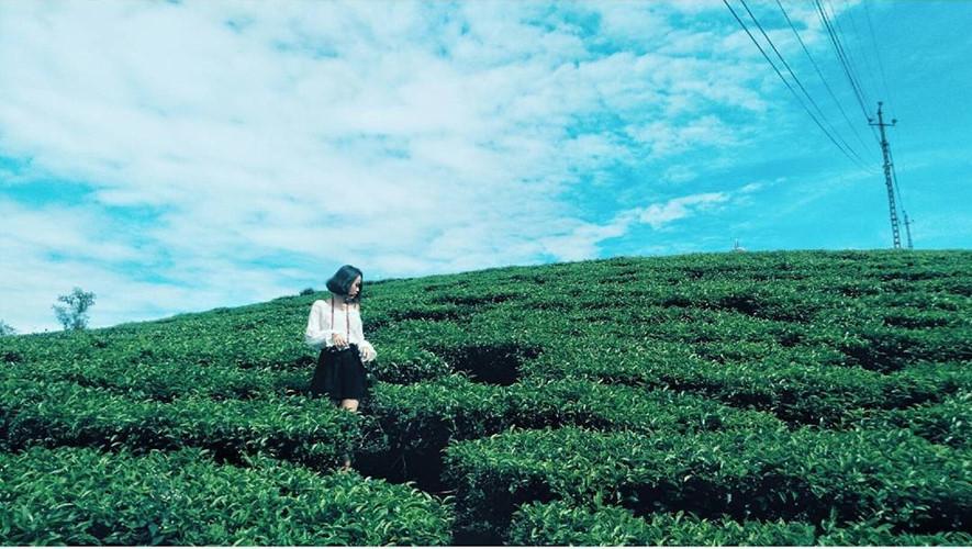 Để đi vào đồi chè phố Núi Gia Lai, các bạn phải chạy theo con đường nhỏ, hai bên đường hàng thông lá kim phủ kín. Với màu nâu của thân cây thông, bạn sẽ cảm nhận được sự vĩnh cửu của thiên nhiên nơi đây, bởi nó vẫn luôn tồn tại bền bỉ qua bao mùa chè, qua bao năm tháng.