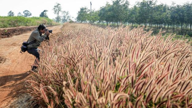 Đồng cỏ xã Gào, TP. Pleiku mùa khô giống như miền Tây nước Mỹ (ảnh: internet)