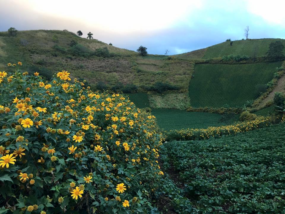 Cây trồng ở đây xanh tốt bốn mùa. Chư Đăng Ya mang vẻ đẹp của những vạt ngô, luống khoai hay từng đám dong riềng. Điểm nhấn cho ngọn núi là sự hòa quyện của những loài hoa, cỏ dại.