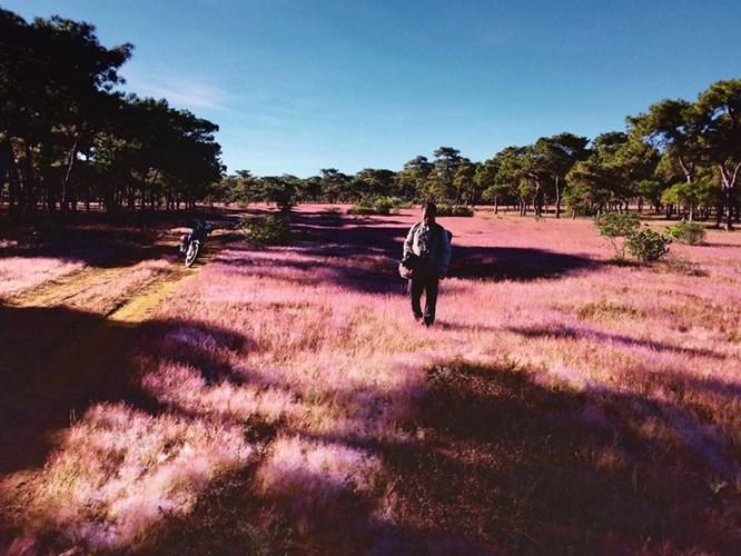 Đâu chỉ Đà Lạt, Gia Lai cũng có đồi cỏ hồng làm say lòng người