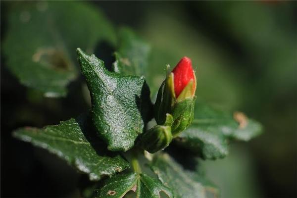 Lộc non bắt đầu hé nở như báo hiệu mùa của sự sống đã về. (Ảnh: Minh Đức Photokt)
