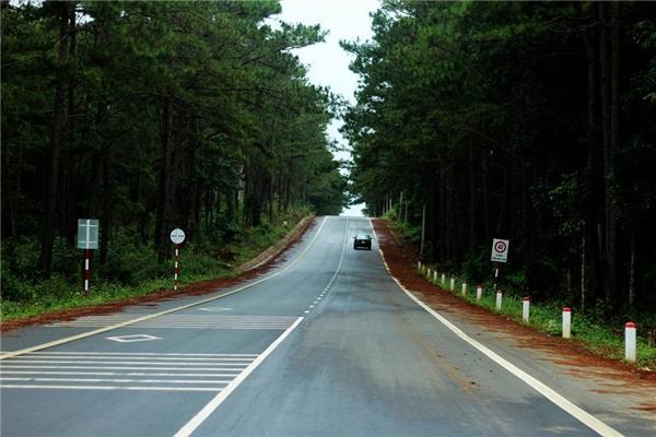 Những tán rừng thông phủ kín hai bên đường. (Ảnh: MV Dương)