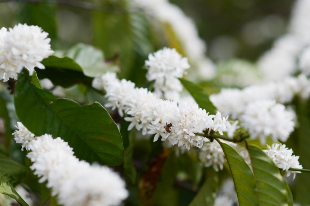 Mùi hương quyến rủ thu hút ong, bướm đua nhau hút mật. Ảnh: N.G