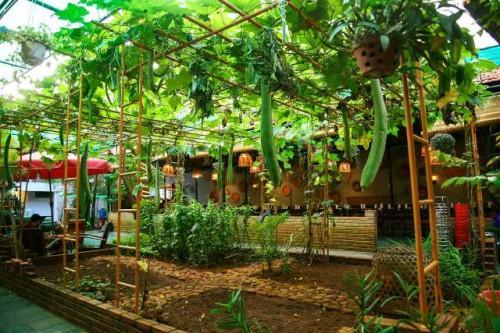Không gian vườn rau sạch tại khu vực sau Nhà hàng Cơm Niêu Mộc