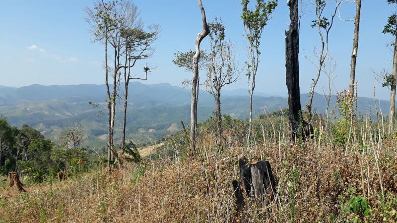 Rừng trồng bị xâm lấn (ảnh minh hoạ)