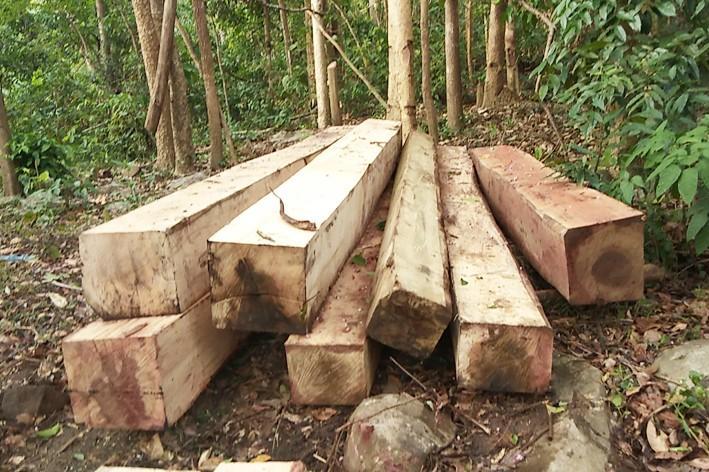 Những bãi gỗ được tập kết trên đỉnh núi Chư Jú.