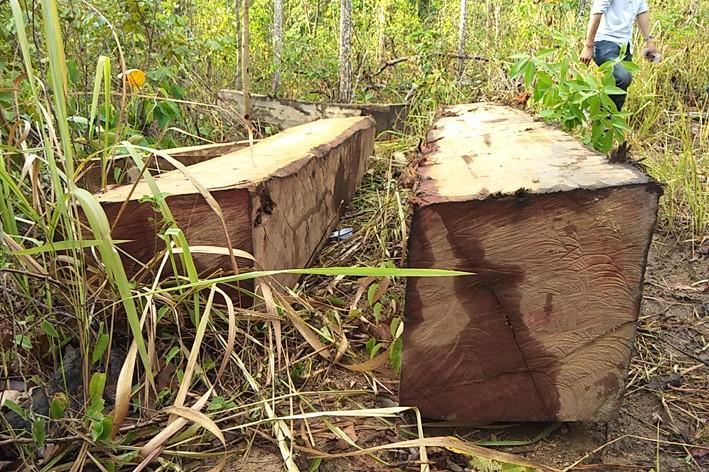 Những hộp gỗ nằm rải rác trong rừng.