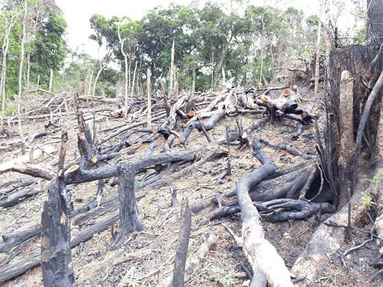 Rừng ở Kon Tum bị đốt phá sau lệnh đóng cửa rừng