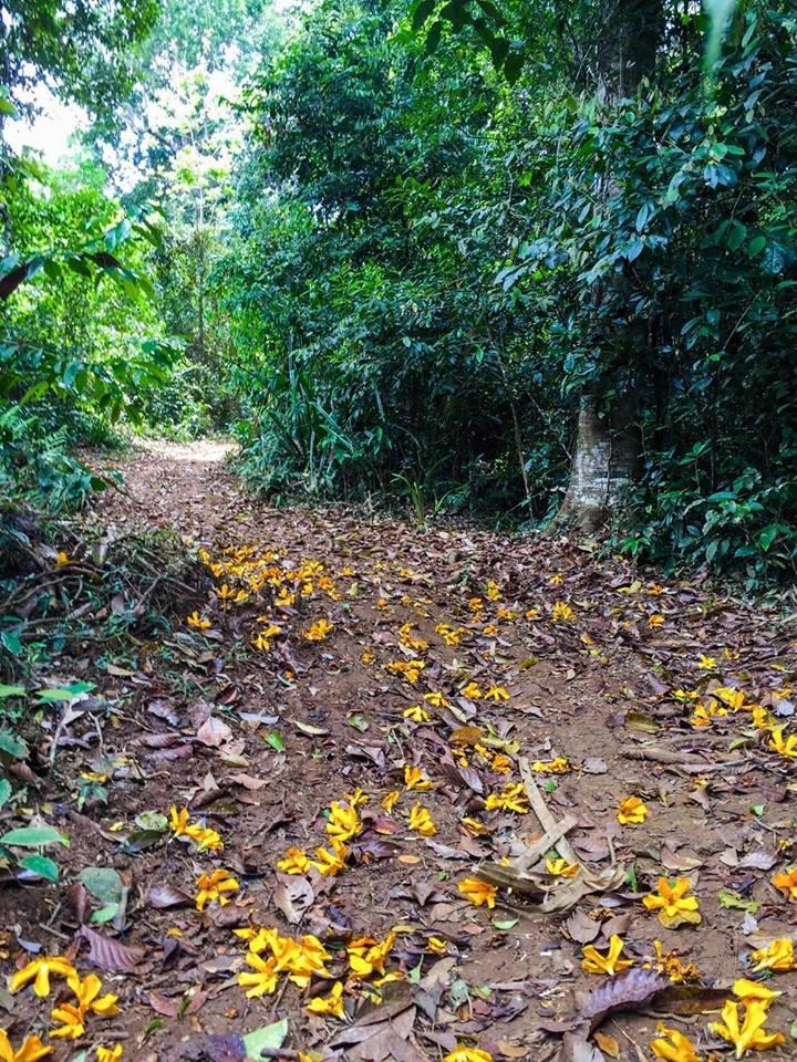 Hệ sinh thực vật trong khu rừng rất phong phú và đa dạng.