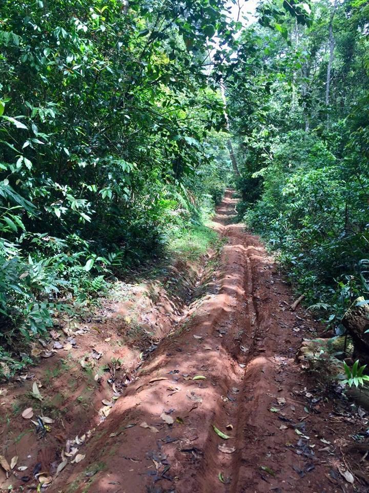 Vì là khu rừng già nguyên sinh nên mọi đường đi còn rất khó khăn.