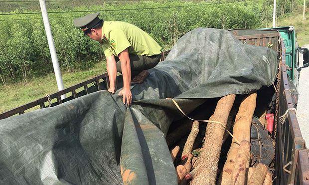 Xe container chở gỗ bị lực lượng chức năng tạm giữ tại hạt kiểm lâm