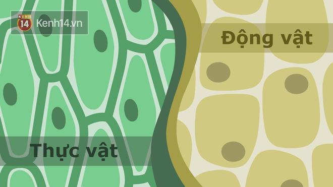 Sự khác biệt giữa tế bào thực vật và tế bào động vật nói chung