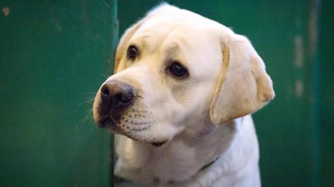Giống con người, chó và mèo cũng cần truyền máu khẩn cấp khi gặp vấn đề thiếu máu nghiêm trọng. Ảnh: Getty Images.