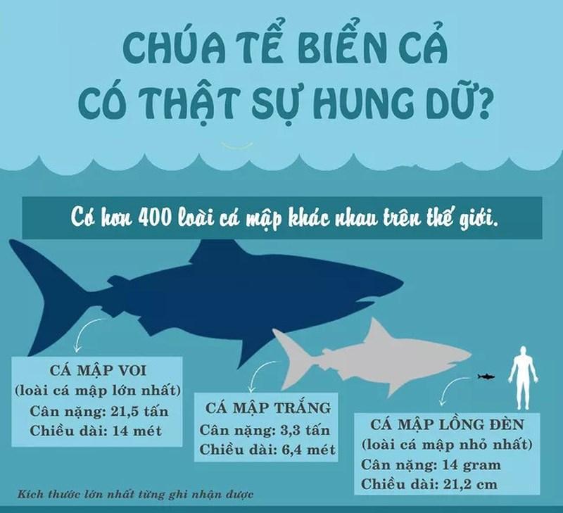 Trên thế giới, có đến 400 loại cá mập khác nhau.