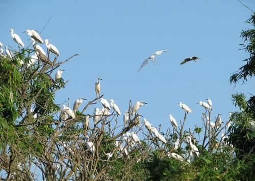Đảo Cò Chi Lăng Lan