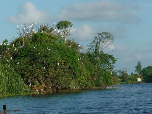 Khám phá đảo Cò Chi Lăng Lan