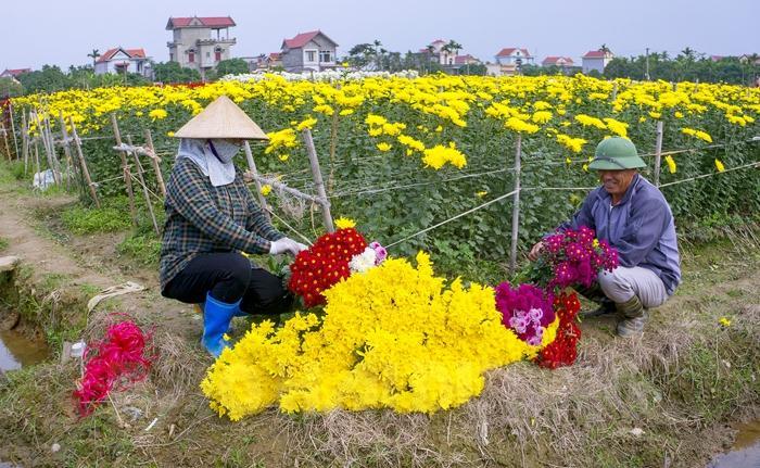 Thu hoạch hoa