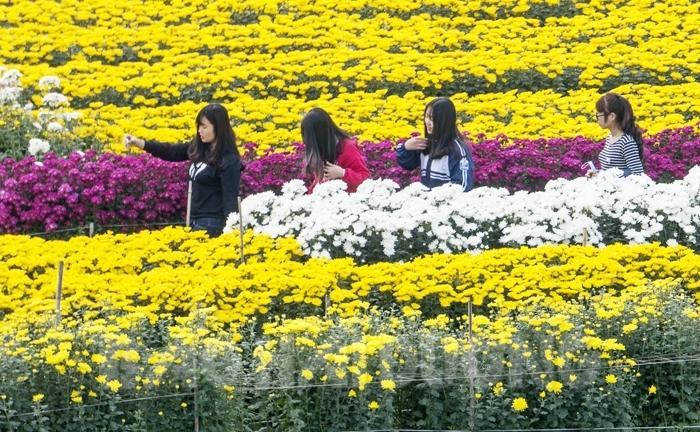 Nhiều bạn trẻ tới thăm vườn hoa Kim Đính
