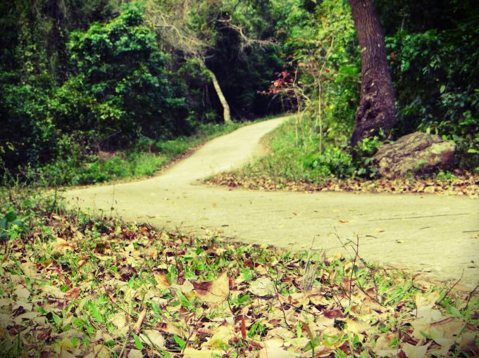 Lối lên chùa Thanh Mai và rừng phong uốn khúc quanh co