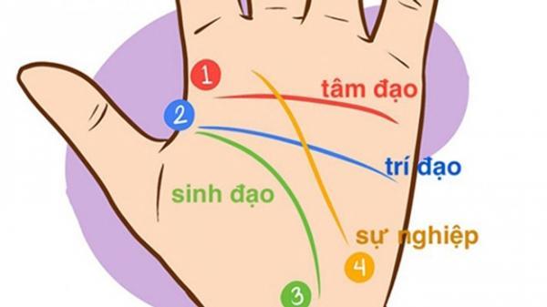 4 đường chỉ tay chính trong lòng bàn tay mỗi người.