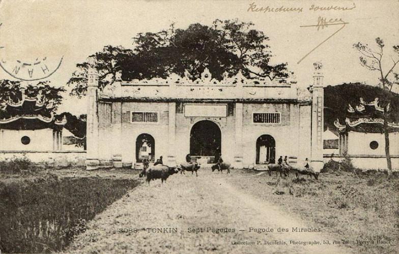 Trẻ chăn trâu tụ tập trước cổng đền, hình ảnh trên một bưu thiếp cổ. Ảnh tư liệu.