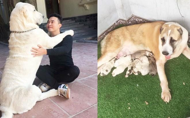 """Chó bố nặng gần 90 kg và đàn chó con hiếm """"gây sốt"""" mạng xã hội Việt - Ảnh 1."""