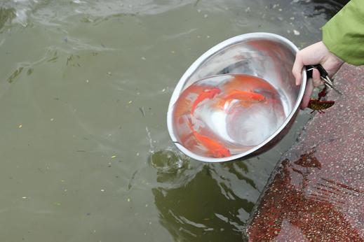Lưu ý khi cúng cá chép phóng sinh