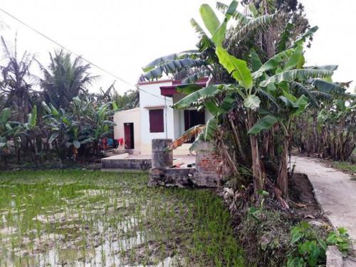 Căn nhà nhỏ của mẹ ca sĩ Châu Việt Cường nằm ở cánh đồng xã Hà Hải, huyện Hà Trung (Thanh Hóa) - Ảnh: Dân Việt