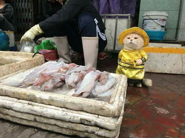 Chú Chó này là một ngôi sao của chợ Hải Phòng.
