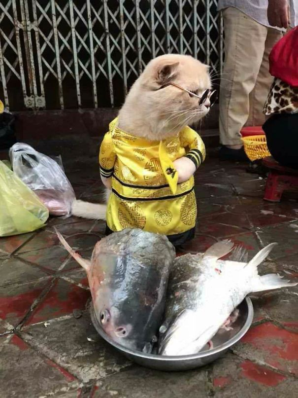 Vì kế sinh nhai mà hàng ngày, anh Chó phải lưu lạc nơi chợ cá Hải Phòng để kiếm miếng ăn...