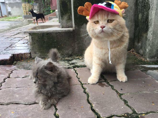 Phong đưa Chó đi cắm sừng... à không, đi gặp bạn mèo khác.