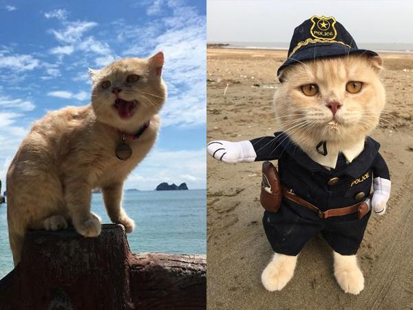 Chó được cậu chủ đưa đi biển. Ảnh: FBNV.