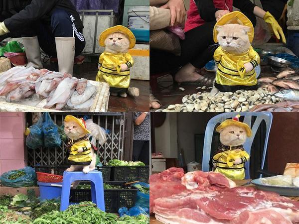Đặc biệt, Chó rất thích được đi ra chợ cùng Phong. Biểu cảm đáng yêu của anh chàng này khiến các cô bán cá thịt ở chợ rất thích thú. Ảnh: FBNV.