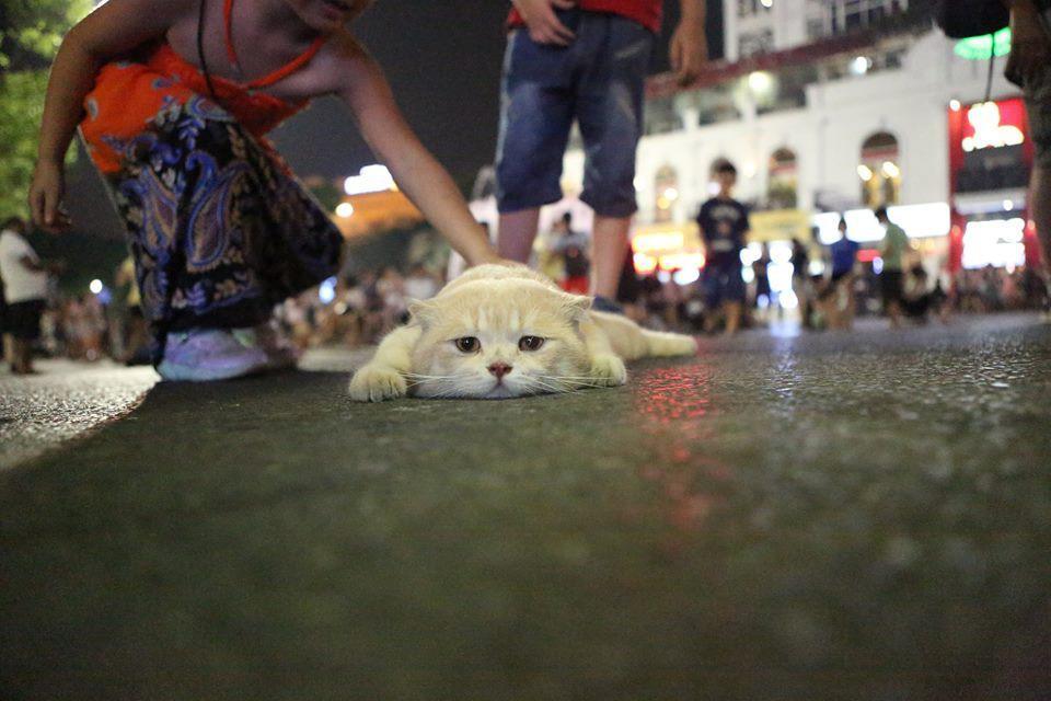 Vì được chủ nhân chiều nên Phong đi đâu chó cũng đi theo.Ảnh: FBNV.