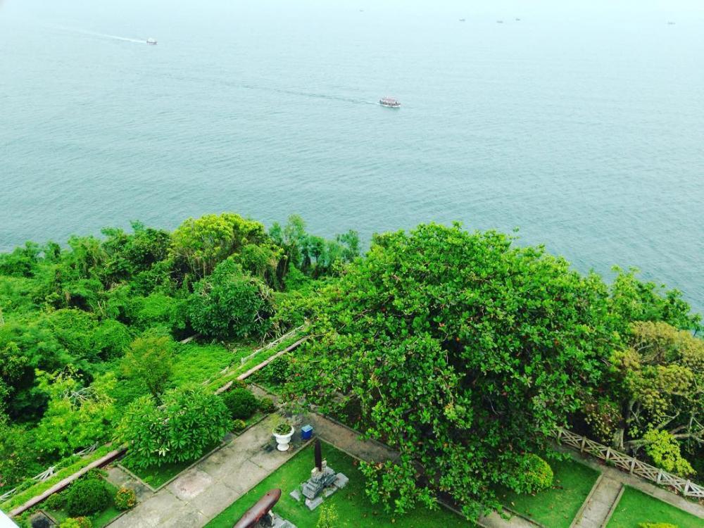Rừng cây ngát xanh bên biển mặn. (Ảnh: @jenny_vib)