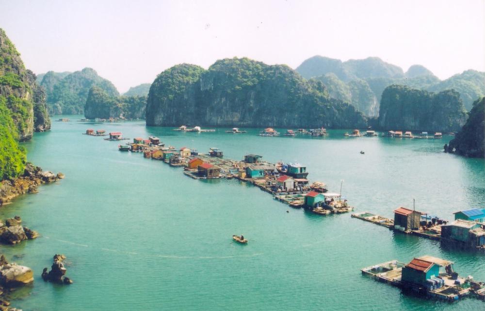 Vịnh Lan Hạ như một bức tranh khổng lồ khắc hoạ lại cảnh tiên... (Ảnh: Foody.vn)