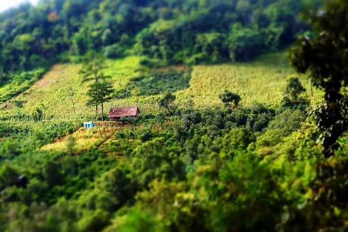 Ngôi nhà nhỏ giữa rừng xanh. (Ảnh: Nguyễn Mai)