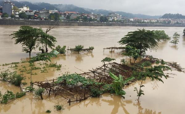 Lũ vùi lấp nhiều diện tích rau người dân trồng hai bên ven sông Hồng, đoạn qua địa phận TP Lào Cai. Ảnh: Phạm Bằng