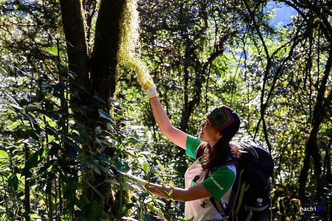 Khu rừng Tả Liên với thảm thực vật nguyên sinh đa dạng khiến chúng tôi rất ngạc nhiên. Những tán cây cổ thụ xum xuê, bao thảm hoa trà rụng trắng lối, lá phong đỏ rực và cả thảm rêu xanh quyến rũ một màu tươi mới.