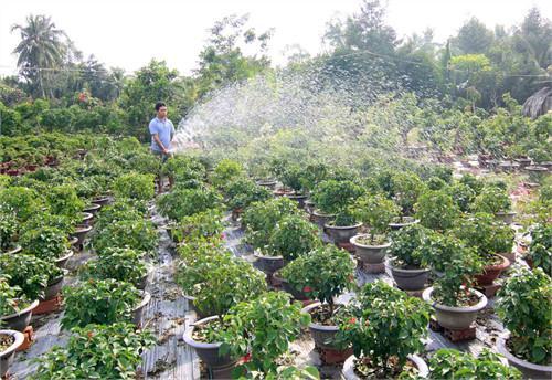 Làng hoa giấy Phú Sơn (huyện Chợ Lách, tỉnh Bến Tre) nổi tiếng khắp các tỉnh ĐBSCL vì màu sắc nổi bật và giá cả phải chăng. Ảnh: Dantocmiennui.