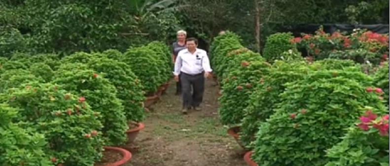 Làng hoa giấy Phú Sơn đã có truyền thống 30 năm tuổi. Ảnh: THBT.