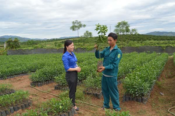 Nguyễn Duy Hưng giới thiệu về cây giống tại vườn ươm của gia đình.