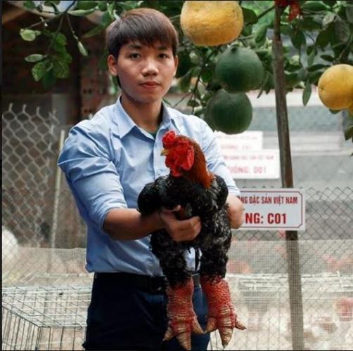 Anh Giang Tuấn Vũ, ông chủ của trang trại gà Đông Tảo 2000m2 có doanh thu hàng tỉ đồng mỗi năm (Ảnh: Vietnammoi)