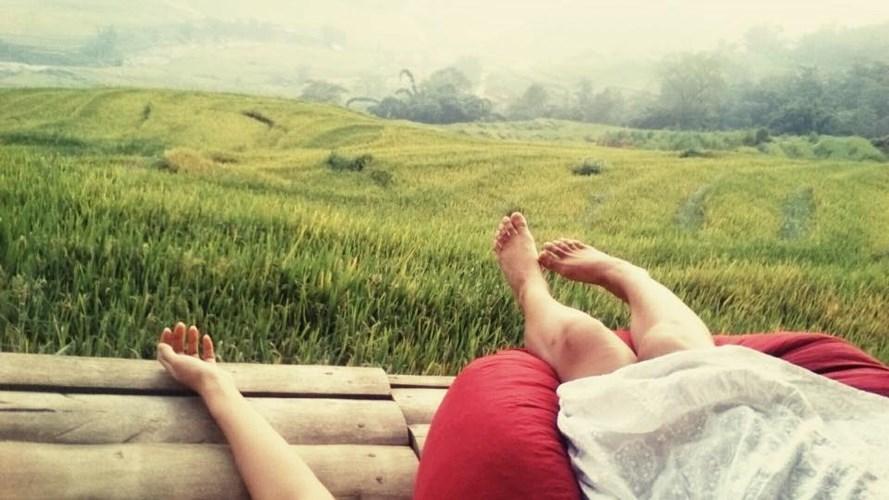 View cánh đồng lúa